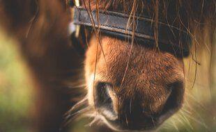 Le poney a été abattu dans le Tarn d'une balle dans la tête.