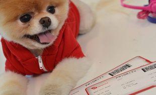 Boo, chien le plus «mignon» du monde, est mort.