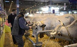 Des vaches au Salon de l'Agriculture le 20 février 2015 à Paris