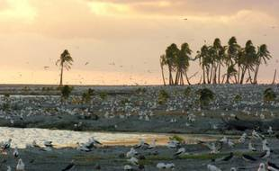 Des fous masqués sur un lagon de l'atoll de Clipperton. Photographie non datée prise en 2005