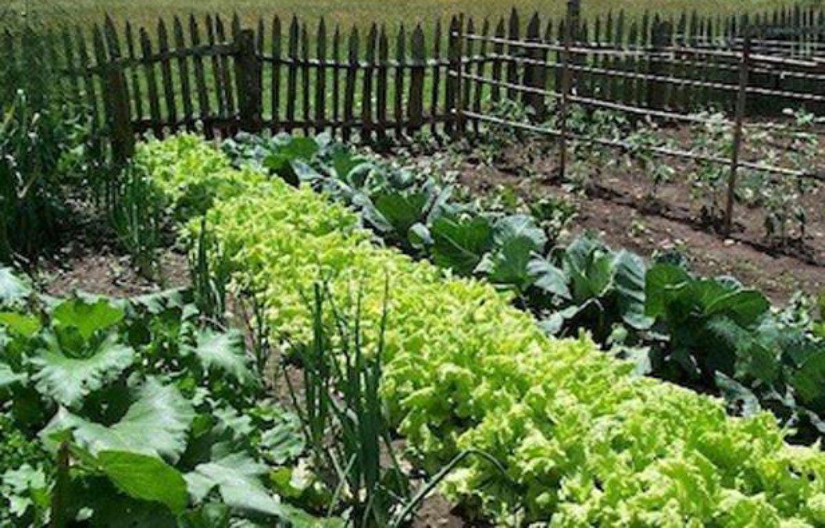Il est possible de revendre vos surplus de légumes sur le web – DR