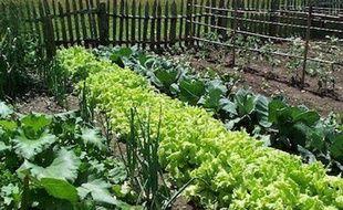 Il est possible de revendre vos surplus de légumes sur le web