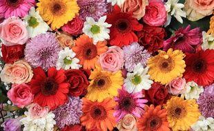 On a tendance à l'oublier ou à l'ignorer mais les fleurs sont les organes sexuels de la grande majorité des plantes.