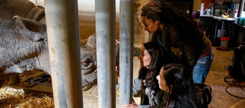 Les équipes de Rewild aux côtés du rhinocéros Jacod, décédé le 31 décembre.