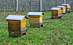 Des ruches. Illustration.