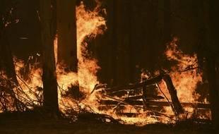 Dans un incendie au nord de Sydney. (illustration)