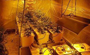 L'apprenti jardinier avait installé tout l'attirail d'une serre dans son garage