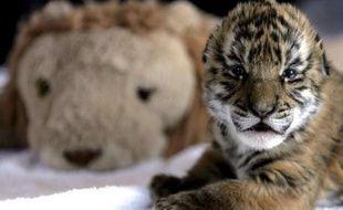 Illustration d'un bébé tigre.