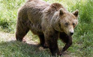 Une ourse dans le parc animalier des Angles, le 24 juin 2006.