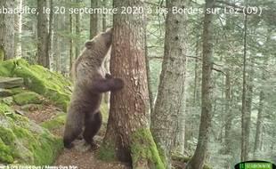 Un jeune ours filmé aux Bordes-sur-Lez, en Ariège, le 20 septembre 2020.
