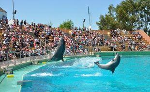 Les dauphins de la «cité marine» comptent parmi les animaux préférés du public.