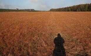Un champ traité au glyphosate en Allemagne.