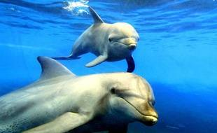 Des dauphins dans un parc aquatique en Australie.