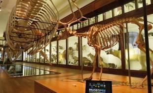 Le museum recoit le projet Museomix