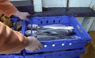 Pour les autorités, le poisson vendu sur les étals est sans risque.