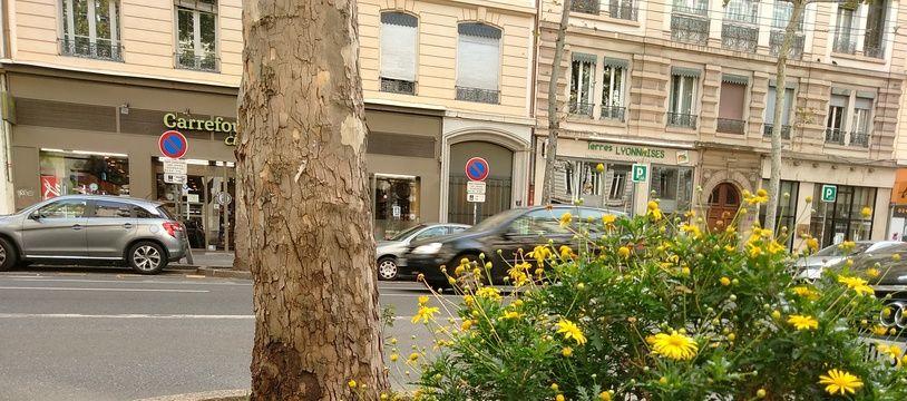 Un pied d'arbre fleuri avenue Jean-Jaurès à Lyon.