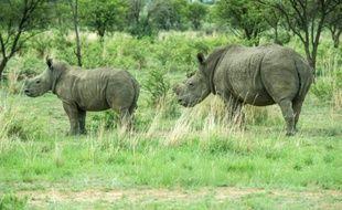 Au moins 1.338 rhinocéros ont été braconnés en Afrique en 2015