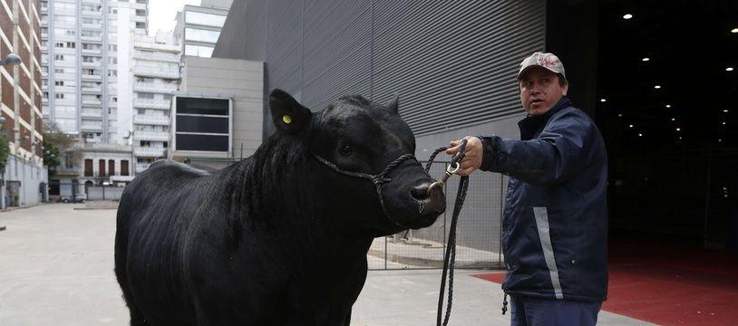 Le taureau «Mbappé», à Buenos Aires le 16 juillet 2018: chaque année, un nom prestigieux est donné au premier bovin qui participera au concours.