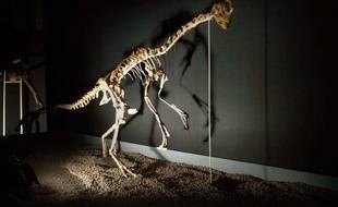Illustration d'un oviraptor.
