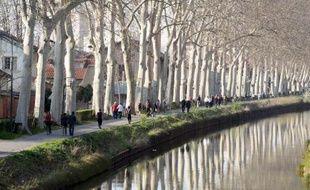 D'icii la fin de l'année 2015 13.850 des 42.000 platanes qui bordent le Canal auront été abattus.