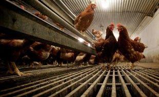 Environ 51 millions de poules pondeuses vont se retrouver hors-la-loi l'an prochain, car elles sont tenues dans des cages non aménagées, ce qui risque d'aboutir à l'ouverture de procédures d'infraction contre au moins onze Etats de l'UE, a annoncé lundi la Commission européenne