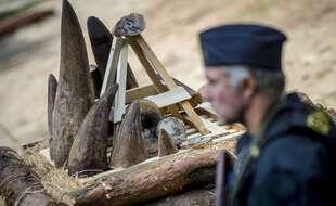 Illustration de cornes de rhinocéros ici avant destruction dans un zoo de République Tchèque.