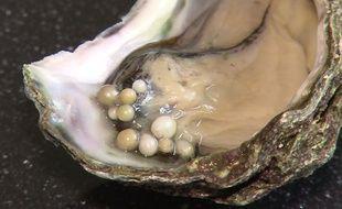 Un poissonnier hollandais a trouvé dix huîtres dans une perle.