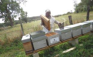 Emilie Banasik, dans son rucher aux environs de Marchiennes, dans le Nord