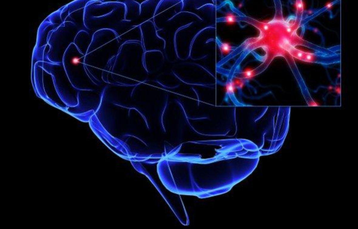 Représentation de l'activité cérébrale – DR