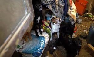 Image extraite de la vidéo de la fondation 30 Millions d'amis, intervenue pour sauver des animaux maltraités à Plouézec.