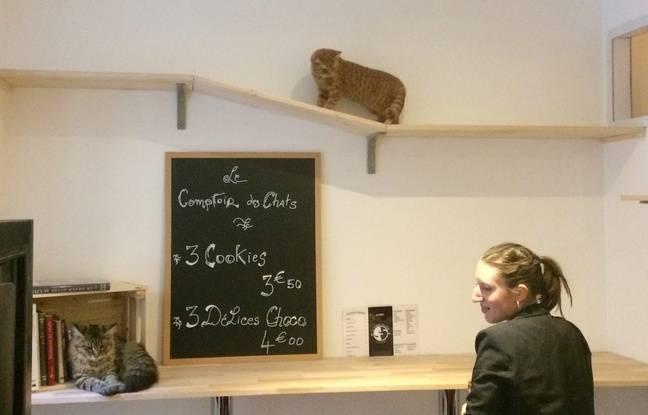 Les clients sont plus intéressés par les minets que par la carte des consommations du salon de thé.