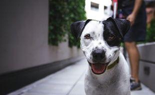 Une intelligence artificielle est capable d'identifier les chiens, en Chine (illustration).