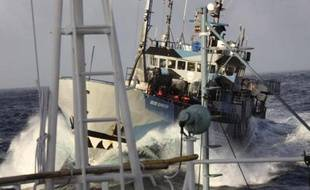 Un bateau de l'organisation écologique Sea Shepherd.