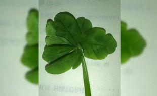 Le fameux trèfle à 7 feuilles découvert par Rémi Beauchamp.