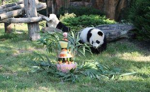 Le bébé panda du zoo de Beauval Yuan Meng, et son gâteau d'anniversaire, le 4 août 2018.