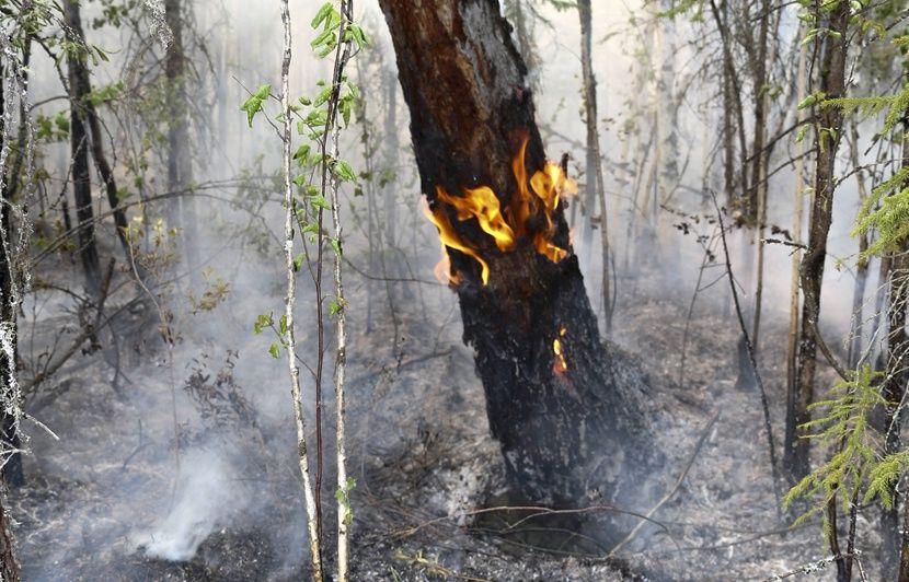 Incendies en Sibérie: Méfiez-vous de ces photos d'animaux, qui n'ont pas été prises en Russie