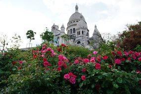 Roses du jardin de la butte Montmartre (avril 2020).