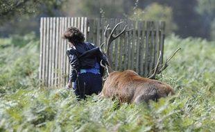 Une femme se fait attaquer par un cerf en rut dans Bushy Park, près de Londres, le 27 septembre 2011.