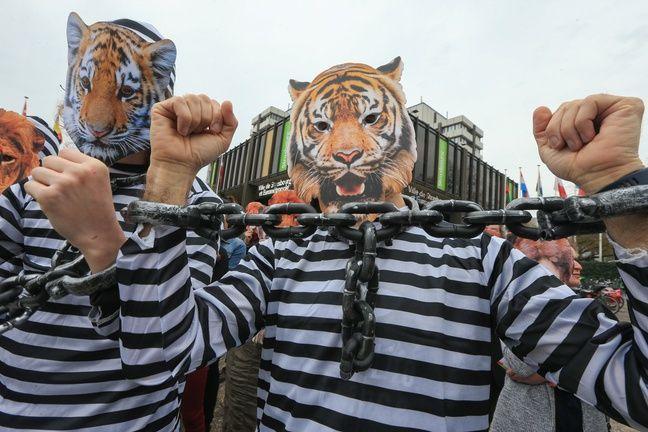 Les militants animalistes de deux associations ont sorti les masques, les tenues et les chaînes à Strasbourg contre les animaux dans les cirques.