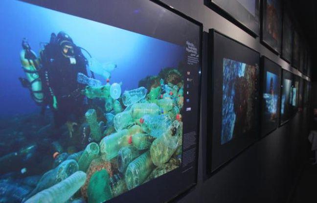 """Exposition """"Les petites îles, sentinelles de la Méditerranée"""", à l'Aquarium de Paris en juillet 2012."""