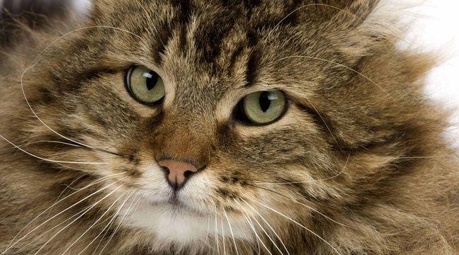 Radiesthesiste chat perdu sur