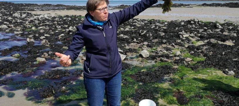 Régine Quéva organise régulièrement des sorties à la découverte des algues, comme ici sur la plage de Bon-Secours à Saint-Malo.