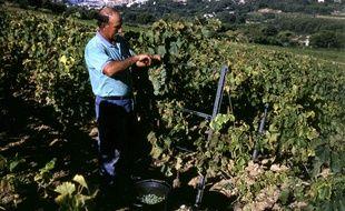 En 2017, ils sont 923 viticulteurs à produire du vin bio en PACA.