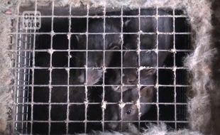 L'association de défense des animaux One Voice dénonce les conditions d'élevage des visons