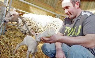 Thomas Fontès a pris des risques pour pouvoir installer son élevage de moutons à Nomain.