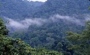 Une forêt en Ouganda.