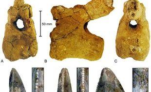 Les fossiles de dinosaures vivant en Arabie, photo publiée dans la revue scientifique Plos One.