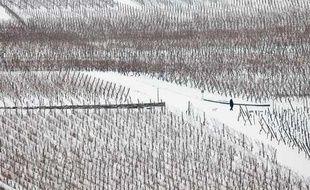 Une femme promène son chien dans le vignoble de Kaysersberg, (est de la France), le 9 janvier 2010.