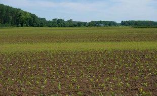 Un champ de maïs sur lequel un goutteur a été installé, photographié le 5 mai 2014 près de Thouars, dans les Deux-Sèvres