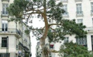 Pour célébrer le jumelage avec Niigata, un bonsaï géant était dressé place Royale cet hiver.